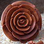 Sabo wood rosebud plugs
