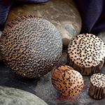 Coconut wood plugs