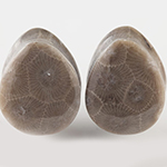 Petoskey (fossilized coral) stone teardrop plugs