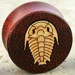 Bloodwood trilobite plugs