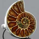 Sterling silver and ammonite ring (Size 6)