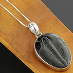 Trilobite and silver necklace
