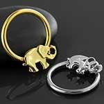 Elephant captive